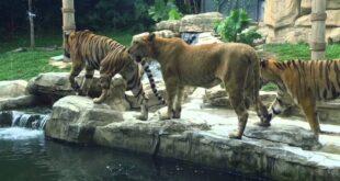 إعادة افتتاح حديقة الحيوانات في العدوي بـدمشق