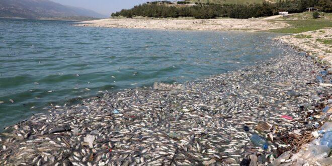 أطنان من السمك النافق على شواطئ بحيرة لبنانية.. ما قصتها؟