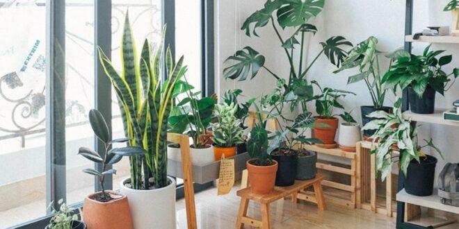 نباتات تمنح منزلكم رائحة عطرة ومنعشة