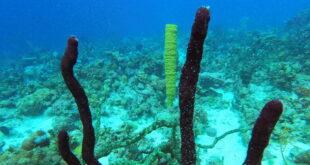 """العلماء يعثرون على آثار لمواد """"غير أرضية"""" في المحيط"""