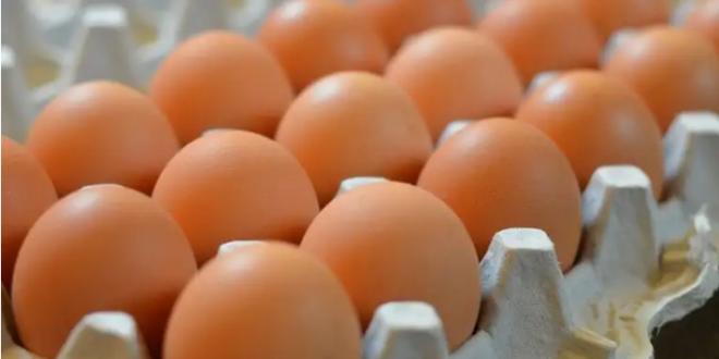 أفضل طريقة لاستغلال كرتونة البيض الفارغة