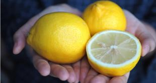 اليكم فوائد بذور الليمون لن تصدقوها