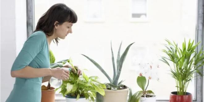تعرّف على النباتات الخطيرة التي لا يمكن الاحتفاظ بها في المنزل