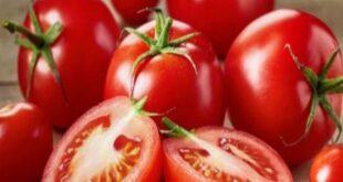 ثمن الغرام الواحد من بذور البندورة