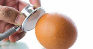 طريقة سهلة لمعرفة البيض الفاسد قبل اكله
