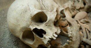 جمجمة «رجل التنين»