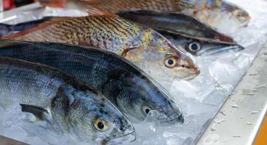 اجراءات حكومية وتحذير من دخول عشرات الأطنان من السمك النافق إلى سوريا
