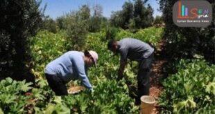 تجربة الزراعة لأسرة مكونة من 15 شخص تتحول لنجاح