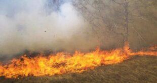 إخماد 55 حريقا خلال أسبوع في السويداء