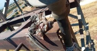 عصفور يقطع الكهرباء عن بلدة سورية
