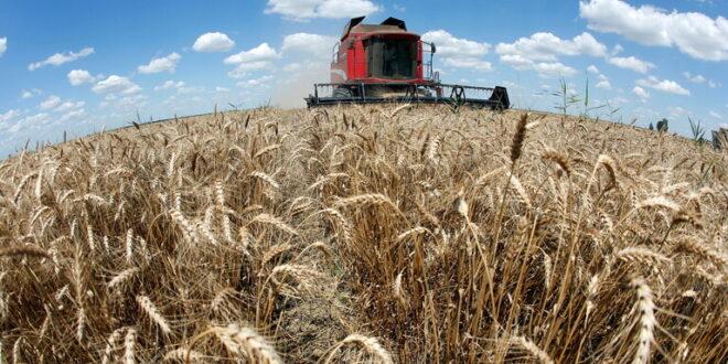 مليون طن من القمح الروسي في الطريق الى سوريا