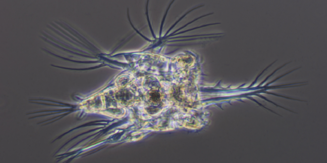 """إحياء """"كائنات زومبي"""" عمرها 24000 عام من التربة الصقيعية في القطب الشمالي!"""