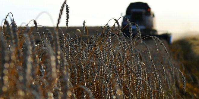 زيادة في رسوم تصدير القمح