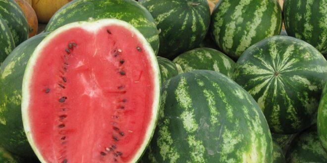 في هذا الصيف كيف تختار البطيخة الحلوة