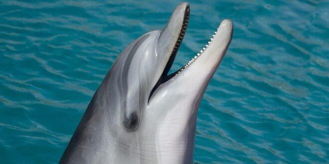 دلفين نادر يثير حيرة العلماء.. شاهدوا لونه (فيديو)
