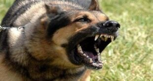 كلبٌ مسعور يهاجم 11 شخصاً في بلدة واحدة!
