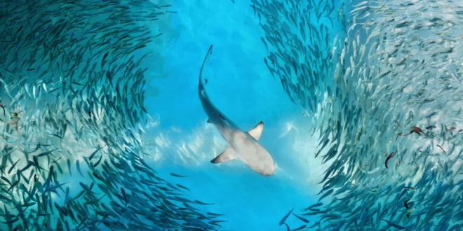 حواس الحيوانات تتجاوز الخمسة الأساسية للبشر