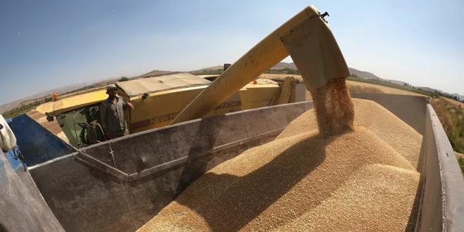 هل تعود سوريا إلى تصدير القمح