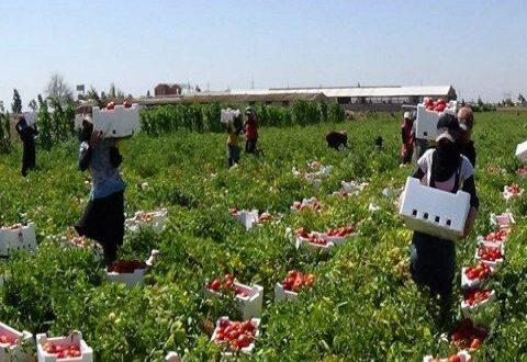 غرفة زراعة دمشق وريفها