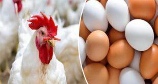 ارتفاع أسعار البيض في الأسواق