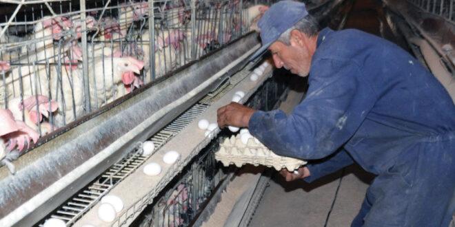 البيضة بـ275 ليرة في اللاذقية.. وحسن يتوقع وصول الطبق إلى 10 آلاف ليرة