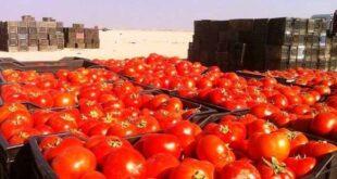 تصدير البندورة إلى العراق وراء ارتفاع أسعارها