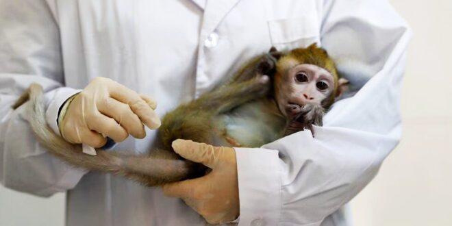 مصدره القرود.. فيروس جديد مخيف يخرج من الصين وتسجيل أول حالة وفاة به
