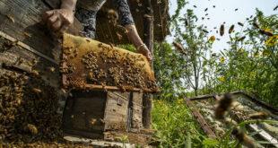 مستعمرة من النحل تهجم على عرس وتخلف قتيلا وجرحى