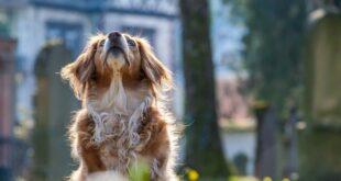 استخدام الحيوانات الأليفة في طريقة جديدة للنصب