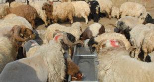 الأضحى يرفع أسعار اللحوم وتوقعات بذبح