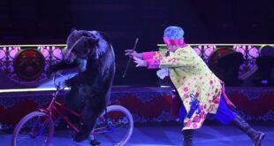 دب يهجم على مدربيه ثلاث مرات خلال عرض سيرك في روسيا