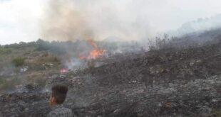 حريق الزيتون في ريف القرداحة