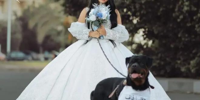 الإفتاء المصرية ترد على إعلان فتاة زفافها من كلب