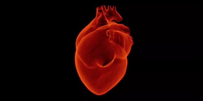 شركة فرنسية تعلن بيع أول قلب اصطناعي من إنتاجها