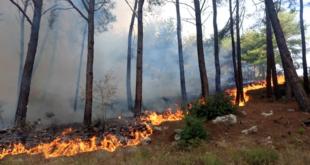 السلطات السورية تحذر من انتشار الحرائق خلال الفترة القادمة