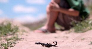 العقارب والأفاعي تنتشر في تدمر