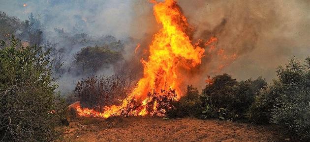 الحرائق تفتك بمائة دونم في ريف اللاذقية