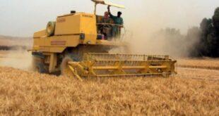 روسيا ترفع رسوم التصدير على القمح مع استقرار الذرة