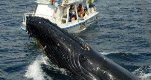 ركاب سفينة يصدمون برؤية حوت عملاق يراقبهم من المياه... فيديو