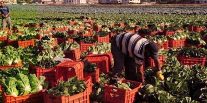 شروط السعودية لدخول الصادرات الزراعية السورية