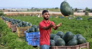 لا تشتر هذا البطيخ