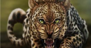 نمر يهاجم عارضة أزياء