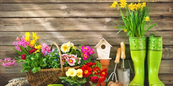 إليكم أفضل 5 نباتات منزلية مزهرة ستملأ رائحتها البيت كله