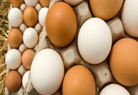 خبير بالإنتاج الحيواني: مدخلات الإنتاج رفعت أسعار الفروج والبيض