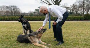 التايمز: كلب بايدن يثير الرعب والبيت الابيض يتستر على جرائمه