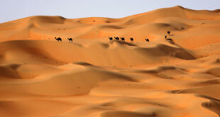 علماء يكشفون سر تماثيل الجمال العملاقة في شمال الجزيرة العربية
