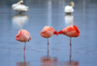 سوريا تزود حديقة الحيوانات في قازان بطيور الفلامنغو