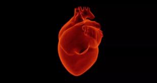 كيف تحسن صحة قلبك وتعزز مناعتك
