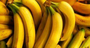 سعر الموز يلامس العشرين ألفاً.. وغرف الزراعة تؤكد الدخول غير النظامي للأسواق