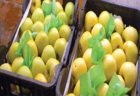 شروط مصرية جديدة تهدد تسويق 80 بالمئة من إنتاج التفاح السوري